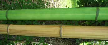 Imitation bamboo is called Bamfaux.